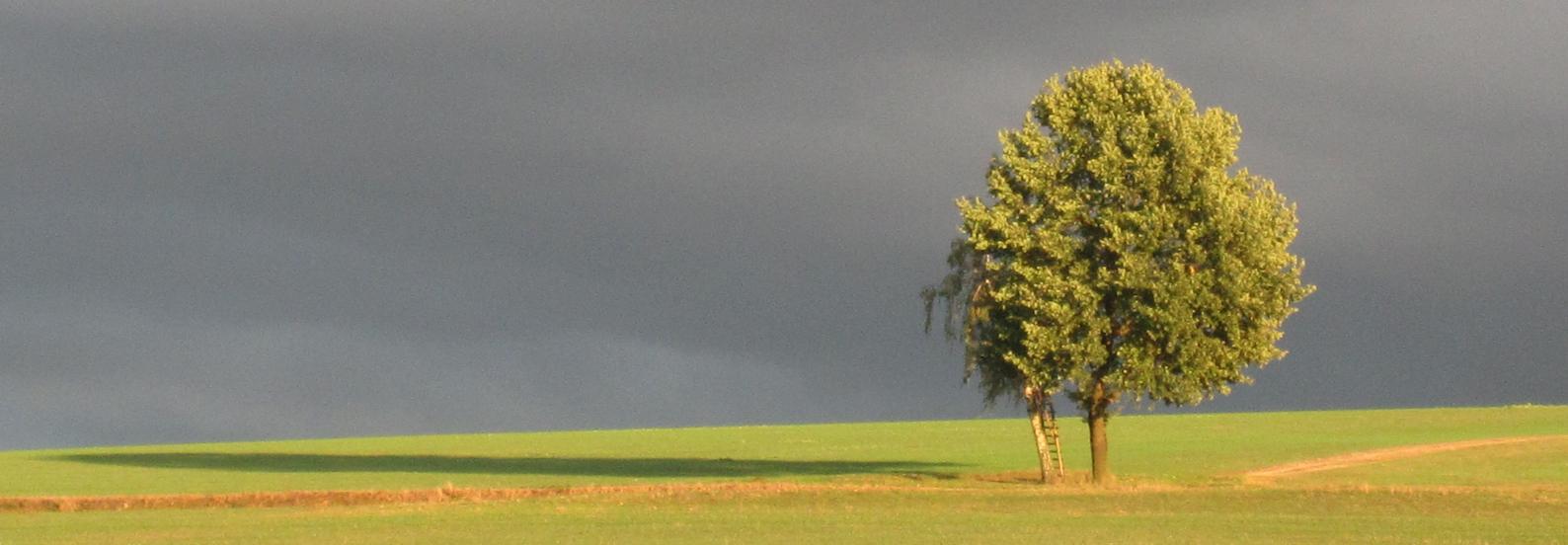 Baum in tiefem Abendlicht